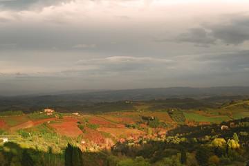 Viti Uva Toscana Chianciano Terme Italia Valle Chianti
