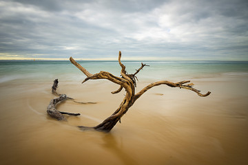Drift Wood, Fort Nepean Catlle Station