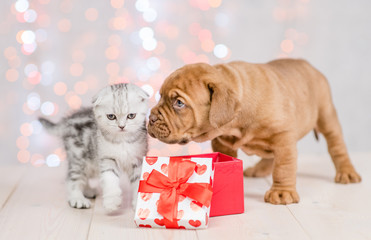 mastiff puppy and kitten with gift box on festive background