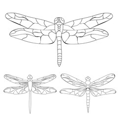 vector isolated, dragonfly sketch