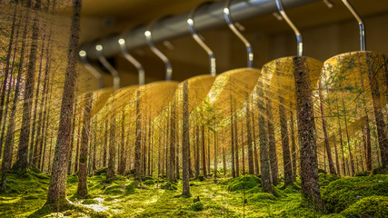 Clothes hanger with dresses in the forest. Concept for organic clothes, closet and sustainable fashion. Wall mural