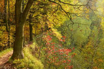 colorful fall in Ukraine