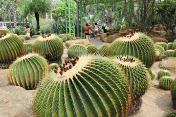 Tourists take pictures Of Echinocactus Gruson in the garden of Nong Nooch in the vicinity of Pattaya in Thailand
