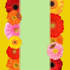 A text card with colorful spring gerbera flowers. Nature background.