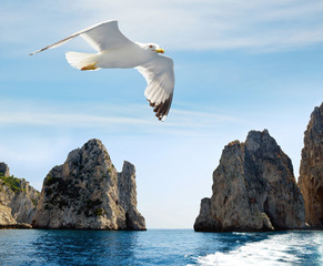Seagull flying near the Faraglioni cliffs on island Capri. Rock formation in the Mediterranean Sea - Italy, Europe.