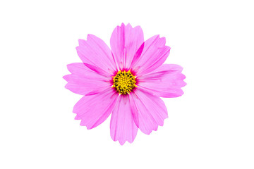 Poster de jardin Univers Pink cosmos flower isolated on white background with clipping path