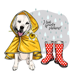 Hand drawn labrador retriever with yellow raincoat and gumboots. Vector spring greeting card. Cute colorful dog with daffodil flower. I love spring rain. Pet portrait. Poster, banner, flyer design.