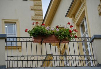 Bilder Und Videos Suchen Balkonpflanzen