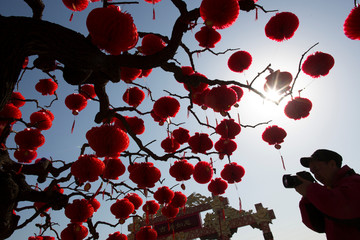 A man takes pictures of a tree decorated with red lanterns ahead of Lunar New Year celebrations in Ditan Park in Beijing