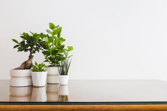 Stylish interior filled of plants in designed white flower pots against white empty wall