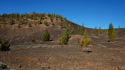 Montana Samara in Teide National Park, one of the most unusual volcanic landscape with views towards Pico del Teide, Pico Viejo, Las Cuevas Negras and open pine forests, in Tenerife, Canary Islands