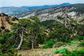 Troodos National Forest Park. Cyprus. Mountains covered forest on blue sky background. Top view. Tourist destination, tourism, travel, caravanning