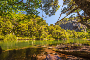 Evergreen beech forest near foot of Andes mountains, Patagonia, Argentina, South America, chile