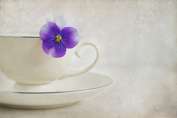 Vintage style textured photograph of a purple Viola flower in a white porcelain teacup on white with room for text