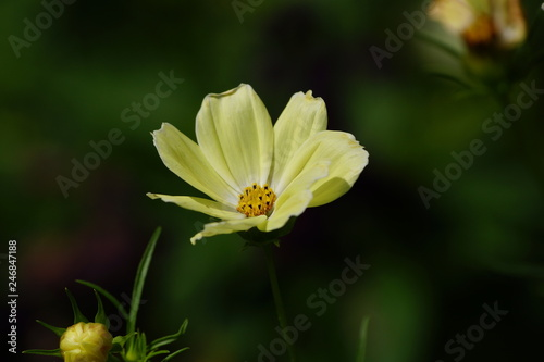 Blume Im Garten Stock Photo And Royalty Free Images On Fotoliacom