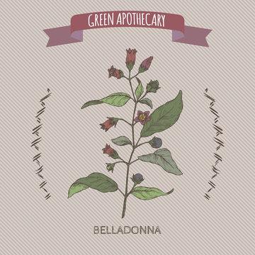 Atropa belladonna aka belladonna or deadly nightshade color sketch. Green apothecary series.