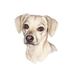 Portrait of a white Dog. Cute puppy isolated on the white background. Animal art collection: Dogs. Hand Painted Illustration of Pet. Good for banner, T-shirt, card, pillow. Design template