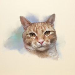 Cute red cat. Realistic watercolor portrait of a pet. Drawing of ginger cat with big eyes executed in watercolor. Good for print pillow, T-shirt. Art background for pet shop. Hand painted illustration