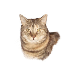 Cute cat isolated on white background.. Portrait of a cat. Realistic drawing of a cat with yellow eyes. Good for print T shirt, pillow. Hand painted illustration. Design template, banner for pet shop.