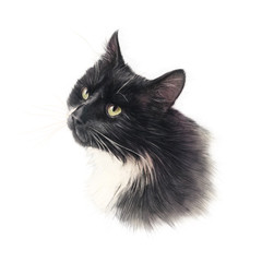 Balck cat with white breast isolated on white background. Realistic drawing of a cat with green eyes. Animal collection. Design template. Good for print T shirt, card. Hand painted pet illustration