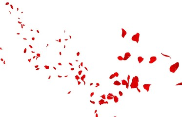 Red rose petals fly into the distance Wall mural