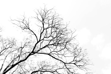 Bare tree branches on a pale white background Fotoväggar
