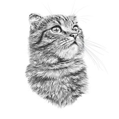 Black and White Drawing of a cute Cat. Cat head isolated on white background. Pencil, ink hand drawn realistic portrait. Animal collection. Good for print T-shirt, banner. Art background for design