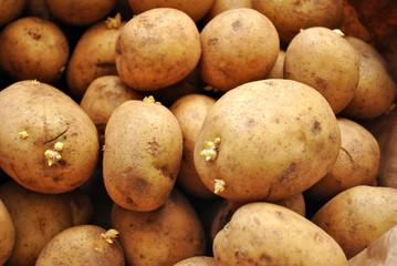 Whole Raw White Potatoes