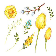 Spring flowers daffodils and tulips, willow and twigs of greenery, Easter symbols, hand drawing, alcohol markers