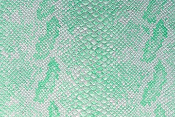 the texture of snake skin in color shade