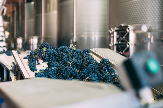 Modern winery machine with grapes
