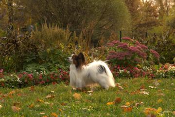 dog in autumn park