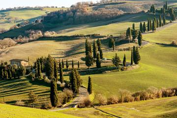 Beautiful country road bordered by cypress trees near Monticchiello, Siena, Tuscany, Italy