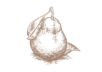 Drawing of yellow pear