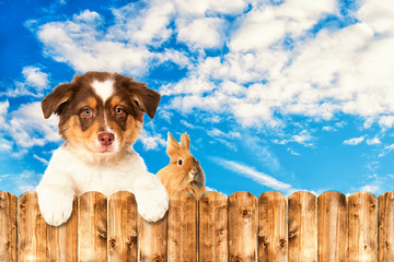 Cute puppy and a rabbit looking over a wiiden fence