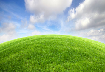 Green grass field with bright blue sky
