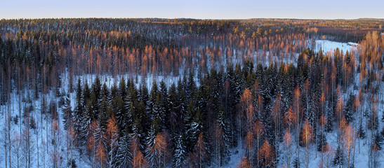 Aerial drone view of a winter landscape in Finland. Snow covered forest. Dramatic sunset evening light. The concept of pure nature.