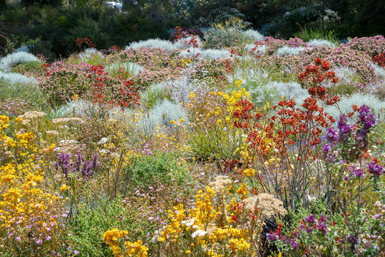 Flowers in many colors in Perth botanical garden with its collection of Western Australia