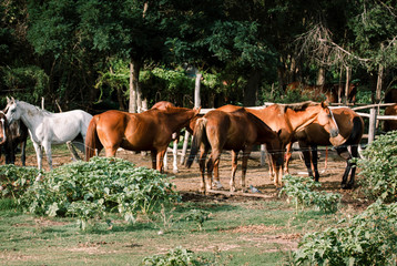 Horses grazing in field on horse farm