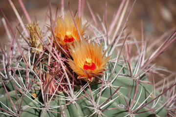 Spines and flowers