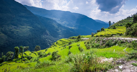 Fotobehang Rijstvelden Beautiful landscape with green field of rice and mountains in nepal