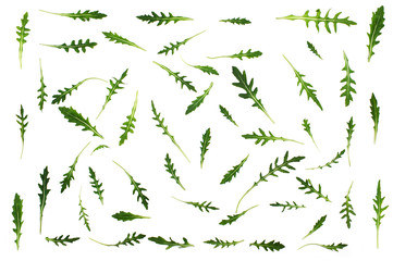 Pattern with  arugula  leaves. Rucola isolated on the white background.