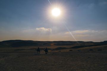camal in desert