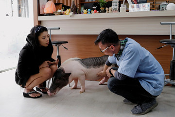 Ge Ge, a pet pig reacts near her owner Guo Sheng-Syuan and veterinarian Chang Chien-Ming during a check up at vet clinic, in Taoyuan
