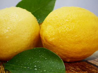 Whole lemons and leaf. Fruit image