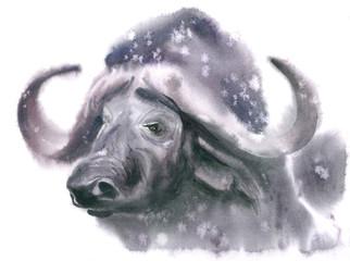 Buffalo's head