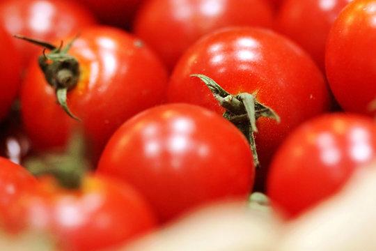 다양한 식물 식재료 유기농 재배 농사 농촌 풍경 백그라운드 이미지