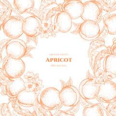 Vector frame with apricots and flowers. Hand drawn. Vintage style