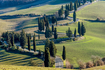 Detail of scenic road edged by cypress trees in the Tuscan countryside near Monticchiello, Siena, Italy
