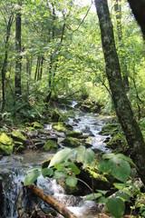 stream in the jungle of Russia